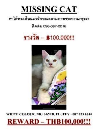 pict-100,000 baht reward for missing cat2.jpg