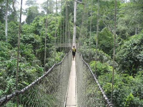 pict-14.-Canopy-Walk-Ghana.jpg