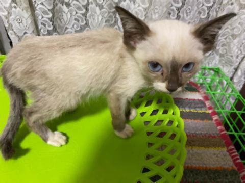 pict-1575459804345澤谷宅の猫 (2).jpg