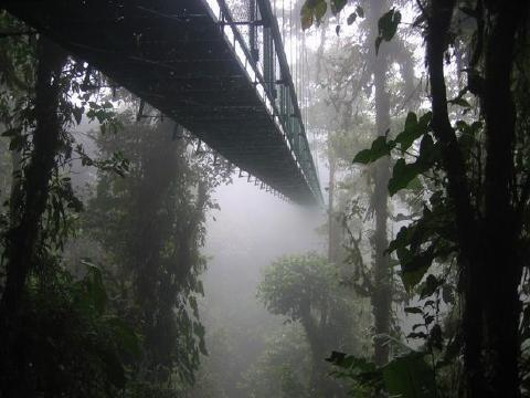 pict-5.-Montenegro-Rainforest-Costa-Rica.jpg