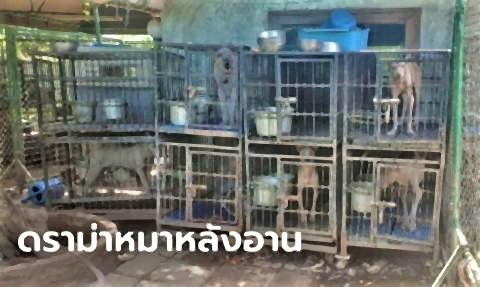pict-50 dogs rescued from alleged Chiang Mai.jpg