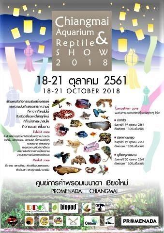 pict-Chiangmai-Aquarium-Reptile-1.jpg