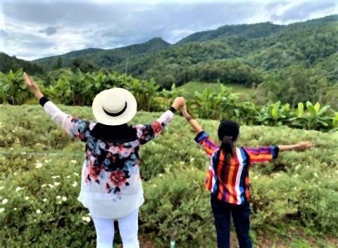 pict-Chrysanthemum field at Samoeng 2.jpg