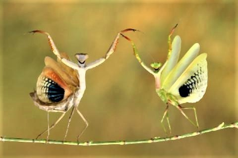 pict-Comedy Wildlife Photography Awards.jpg