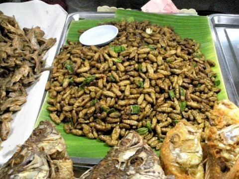 pict-DSCN3397昆虫食.jpg