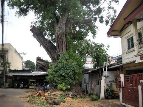pict-DSCN4385大木の伐採 (2).jpg