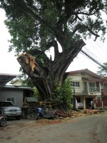 pict-DSCN4385大木の伐採 (4).jpg