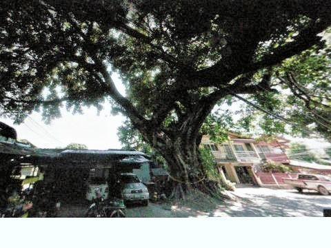 pict-DSCN4395大木伐採前 (2).jpg