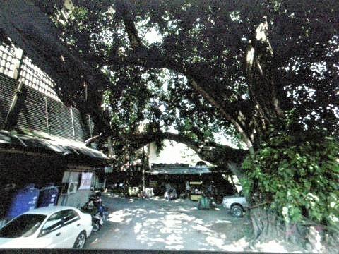 pict-DSCN4395大木伐採前 (3).jpg