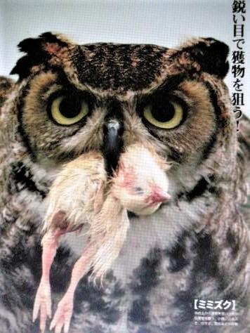 pict-DSCN5453捕食 (2).jpg