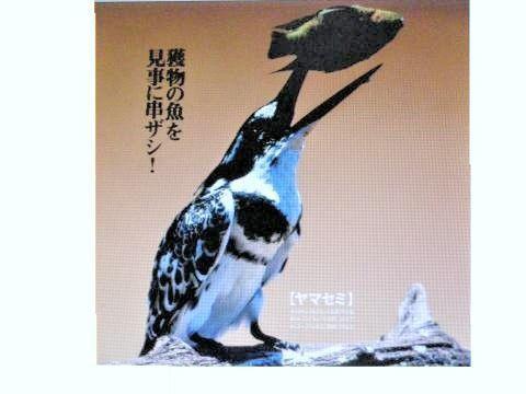 pict-DSCN5453捕食 (3).jpg