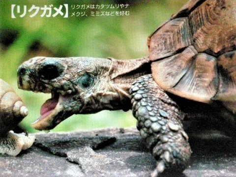 pict-DSCN5453捕食 (4).jpg