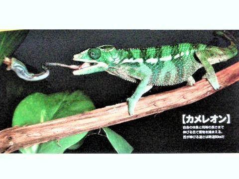 pict-DSCN5453捕食 (5).jpg