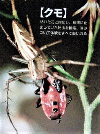 pict-DSCN5453捕食 (7).jpg