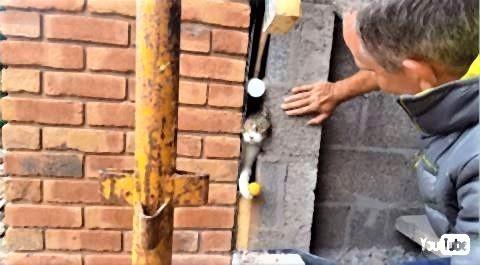 pict-なぜ中国の子供はよく建造物に挟まれるのか?3.jpg