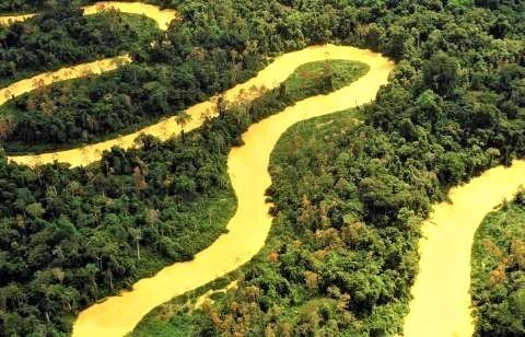 pict-アマゾン熱帯雨林(ブラジル).jpg