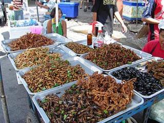 pict-イナゴ、竹虫、蛹、コオロギ、サソリ、ガムシ、タガメ.jpg