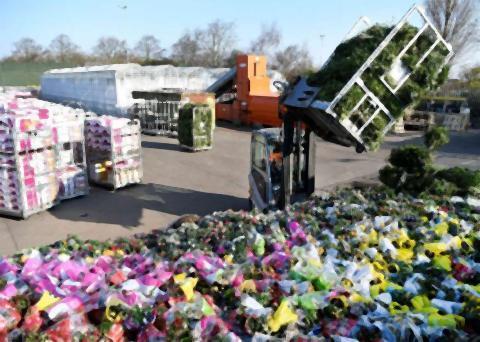 pict-オランダ、花の売り上げ.jpg
