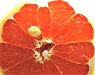 pict-オレンジ.jpg