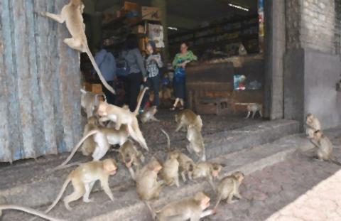pict-サルに占拠された街.jpg
