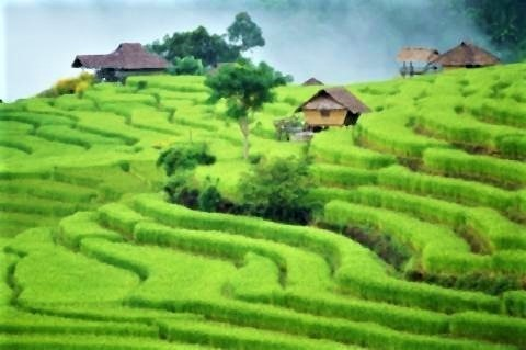 pict-バンパボンピアン村の自然の美しさ.jpg