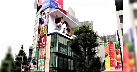 pict-新宿東口にデジタルサイネージの巨大猫が出現1.jpg