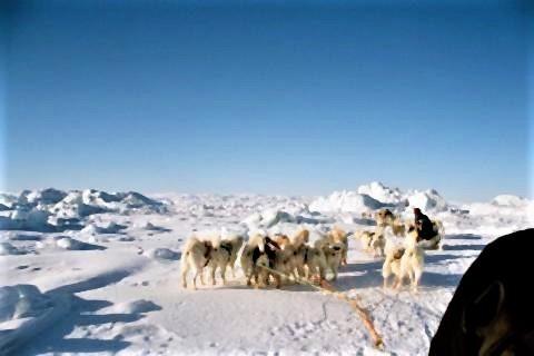 pict-氷河が溶け続けるグリーンランド 3.jpg