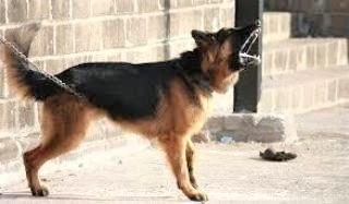 pict-犬が人間に吠える.jpg