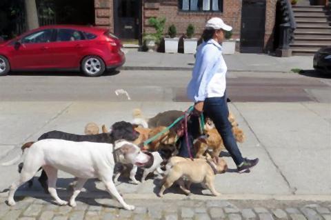 pict-犬の散歩代行屋.jpg