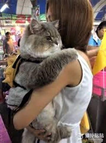 pict-猫と美女2.jpg