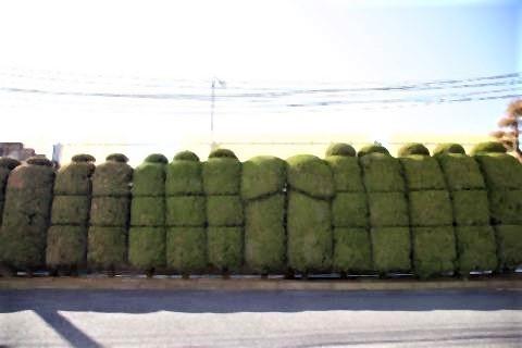 pict-相模ゴム本社工場内の植木.jpg