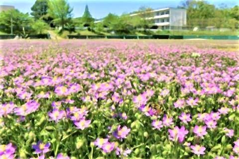 pict-福島県いわき市の市立好間中の校庭.jpg