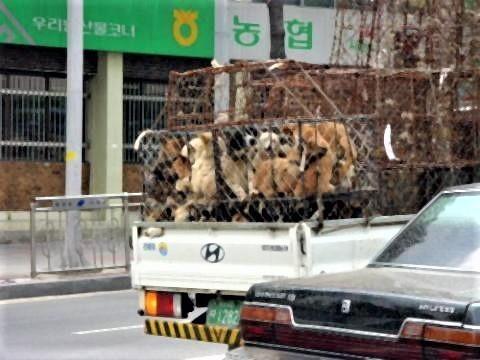 pict-移送される犬.jpg