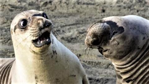 pict-表情豊かな動物達2.jpg
