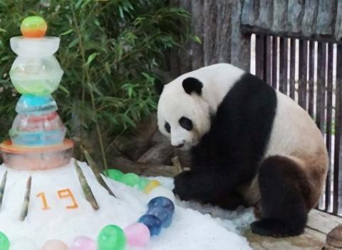 pict-19歳の誕生日を迎えたパンダ.jpg