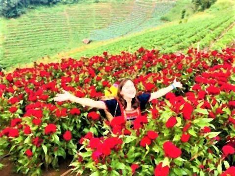 pict-Farm of winter flower at Mon Cham5.jpg