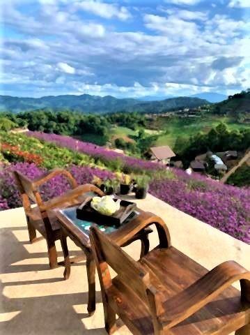 pict-Farm of winter flower at Mon Cham6.jpg