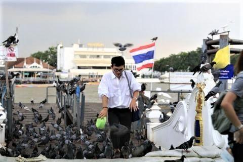 pict-Govt bans PIGEON feeding.jpg