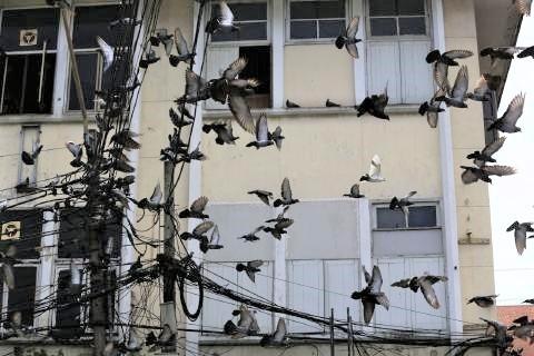 pict-Govt bans PIGEON feeding2.jpg