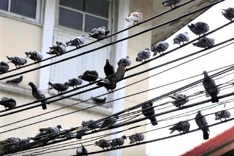pict-Govt bans PIGEON feeding6.jpg