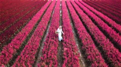 pict-I love flower Farm.jpg