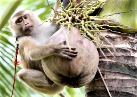 pict-Monkey business.jpg