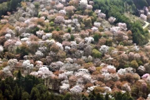 pict-Mt Yoshino.jpg