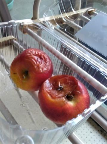 pict-P_20180413_075330リンゴ.jpg