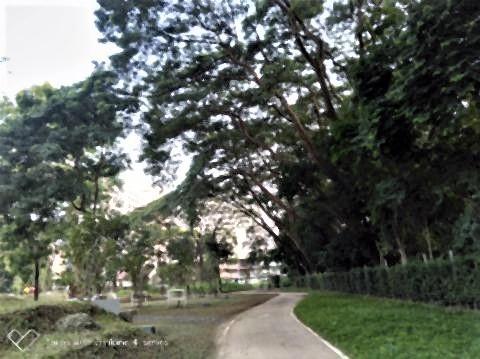 pict-P_20191010_063245_vHDR_On_p公園の倒木 (2).jpg
