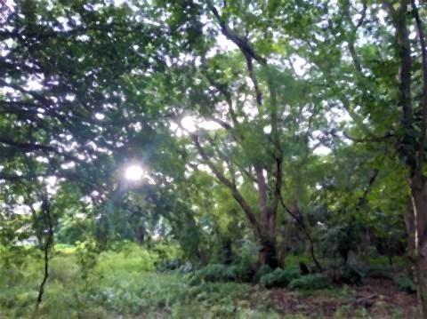 pict-P_20210722_063318_vHDR_On緑の池 (3).jpg