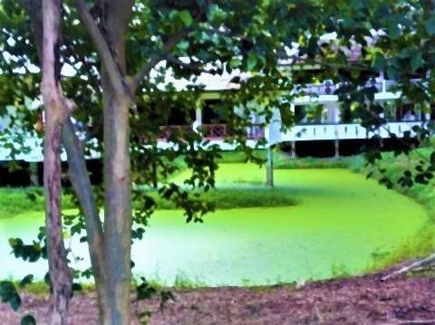 pict-P_20210722_063318_vHDR_On緑の池 (4).jpg