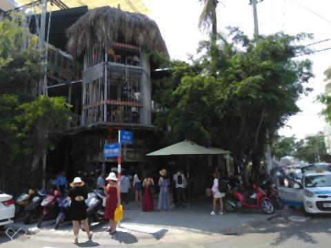 pict-Rainforest (1).jpg