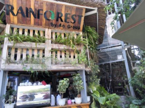 pict-Rainforest (2).jpg