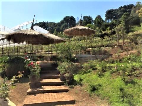 pict-Rose Garden at Huay Phak Phai Royal project.jpg